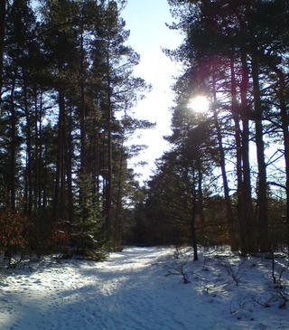Skitur31jan12c